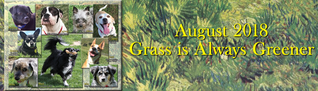 August 2018: Grass is Always Greener!