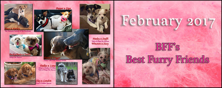 February 2017: BFFs Best Furry Friends