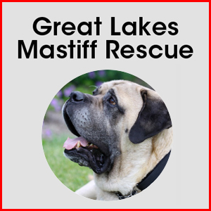 Great Lakes Mastiff Rescue