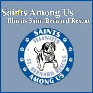 Saints Among Us: Illinois Saint Bernard Rescue