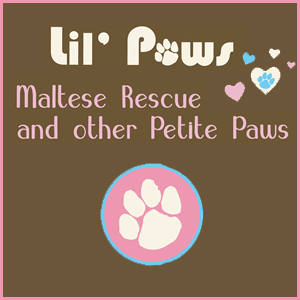 Lil' Paws Maltese and Other Petite Paws