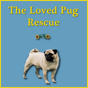 The Loved Pug Rescue