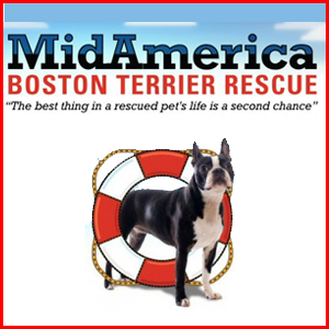 MidAmerica Boston Terrier Rescue