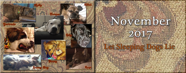 November 2017: Let Sleeping Dogs Lie