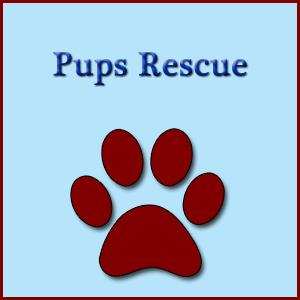 Pups Rescue