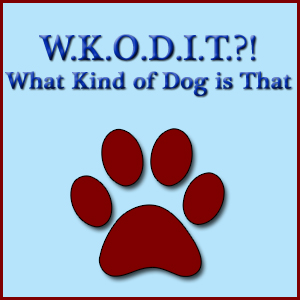 WKODIT?! What Kind Of Dog Is That